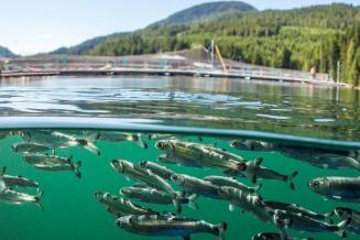 Госдума приняла поправки в закон об аквакультуре