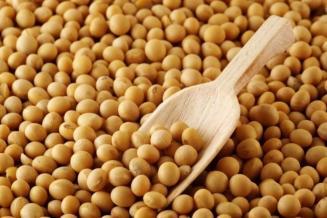 В России запатентовали высокоэффективный способ повышения урожайности сои