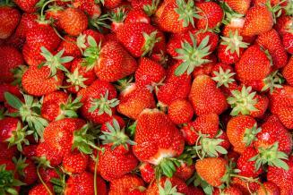 Производство садовой земляники в России увеличилось на 16,7%