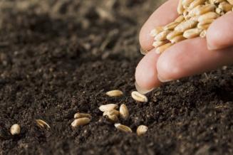 В Ингушетии сев яровых зерновых проведен на31тыс.га