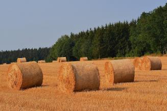 В Белгородской области идет заготовка кормов
