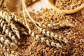 Ростовская область — лидер экспорта зерна по итогам 2020/21 сельхозгода