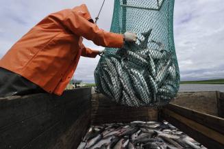 Рыбакам разрешили потрошить рыбу на борту судна