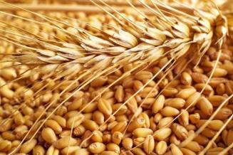 Экспорт зерна из РФ всезоне-2020/21 превысит 48млнт