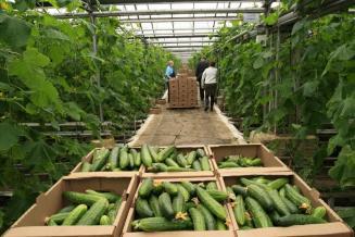 В I полугодии в Чувашии производство сельхозпродукции выросло на 4%