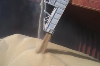 Пошлина на экспорт пшеницы из России с 28 июля снижается до 31,4 долл. США/т
