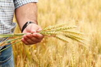 Аграрии Рязанской области получили 670,3 млн руб. федеральных средств господдержки