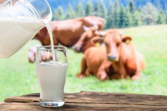 В Кабардино-Балкарии за 5 месяцев произвели 178 тыс. т молока