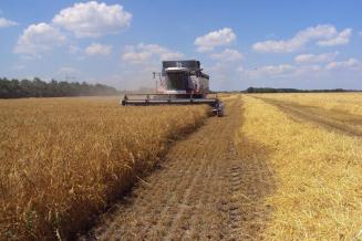 В Краснодарском крае намолочено 5,5 млн т зерновых колосовых и зернобобовых культур