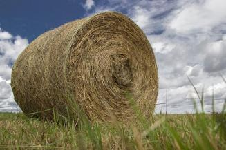 Пермские аграрии выполнили план заготовки кормов на 27,5%