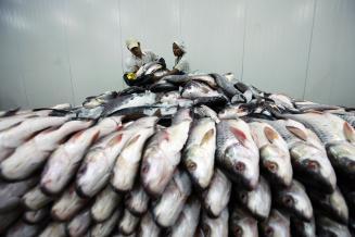 За 6 месяцев Приморье экспортировало рыбу и морепродукты на 630,2 млн долл. США
