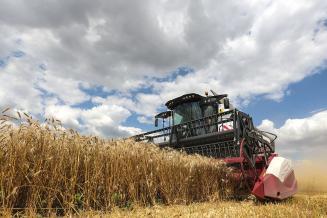 В Республике Калмыкии намолочено 451,6 тыс. т зерна