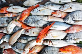 Рынок Вьетнама открыли для российской рыбы