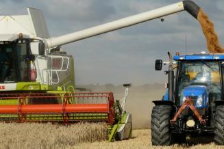 Минсельхоз России сохраняет прогноз урожая зерновых на уровне 127,4 млн т