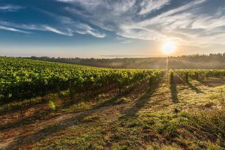 С 1 октября в России появится отдельная категория земель «под виноградарство»