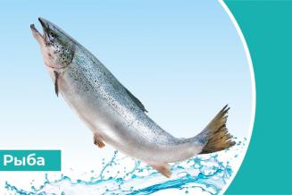 Дайджест «Рыба»: Россия будет мировым лидером роста вылова рыбы к 2030 году – ФАО