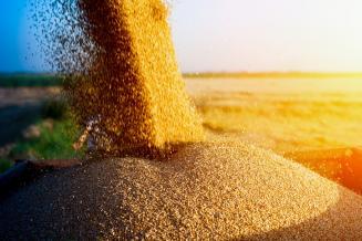 Россия с начала сельхозгода экспортировала 36,2млнт пшеницы