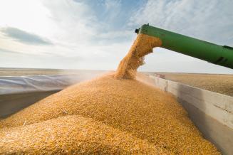 К 27 июля в России собрано 48млн т зерна