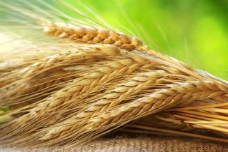 Сбор зерна в Тамбовской области превысил 2,2 млн т