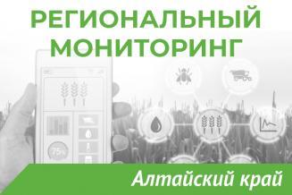 Еженедельный бюллетень о состоянии АПК Алтайского края на 13 августа
