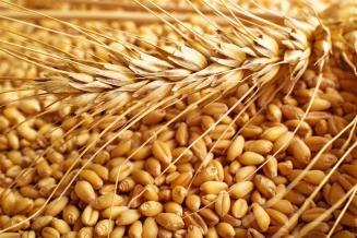 Хлеборобы Башкортостана собрали более 1,1 млн т зерна