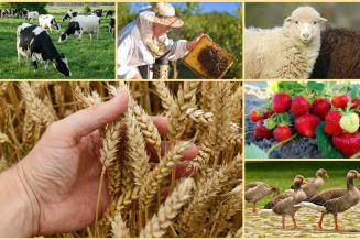 Волгоградские аграрии получили из федерального бюджета 1,6 млрд руб. господдержки