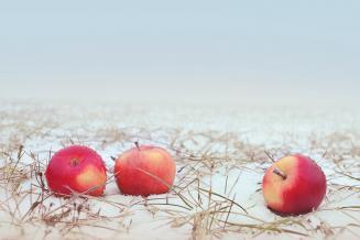Российские садоводы попросили проверить импортные яблоки