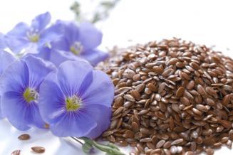 За 7 месяцев 2021 года чувашский экспорт масличных семян и плодов вырос в 1,7 раза