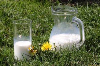 В январе — июне хозяйства Вологодской области произвели 294,2 тыс. т молока