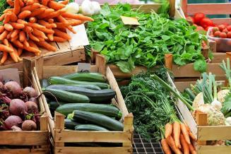 В Оренбургской области началась уборка овощей открытого грунта