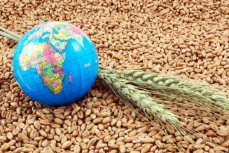 Пошлина на экспорт пшеницы изРФ с 11 по17августа снизится до31долл.США/т