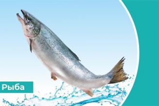 Дайджест «Рыба»: производство семги вРоссии выросло в4,8раза
