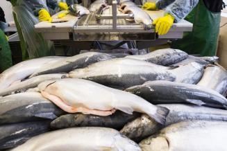 Вьетнам может стать одним из ведущих мировых центров переработки продукции морского промысла