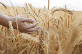 В Орловской области набирает обороты уборка урожая