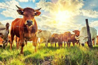Рынок страхования сельхозживотных сгосподдержкой вРФ засемь месяцев вырос на46%
