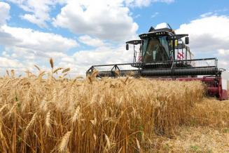 Около 60% площади зерновых и зернобобовых убрано в Удмуртии