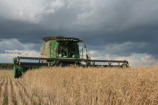 В Смоленской области уборка зерновых изернобобовых культур завершена на61,4%площади