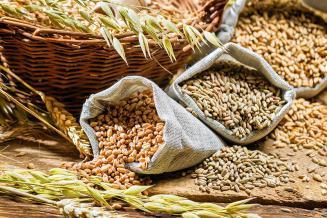 В Северной Осетии собрали 282тыс. т зерна