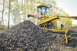 В Липецкой области накопано 267,8тыс.тсахарной свеклы