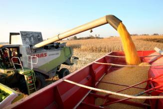 В Волгоградской области намолочено 3,8 млн т зерна