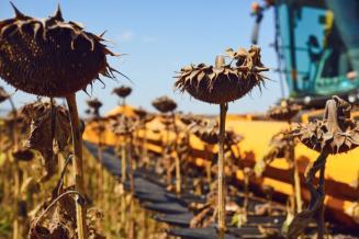 Доход останется в масличных. Подсолнечник, соя и рапс — по-прежнему высокорентабельны