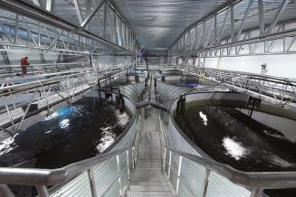 В 2021 году производство аквакульуры в России может вырасти на 15% — Росрыболовство