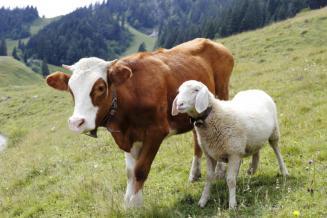 В Северной Осетии гранты «Агростартап» получили 56фермерских хозяйств