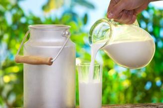 С начала года пермские сельхозорганизации произвели 343 тыс. т коровьего молока