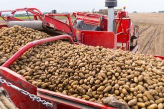 Астраханская область лидирует в ЮФО по уборке овощей и картофеля