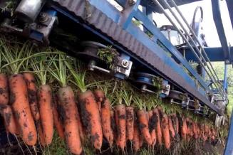 Саратовская область — лидер ПФО в намолоте зерна и сборе овощей открытого грунта