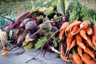 В Костромской области собрано 0,42 тыс. т овощей «борщового набора»