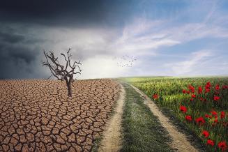 На финансирование программы по климату и экологическому развитию до 2030 года могут выделить 34 млрд руб.