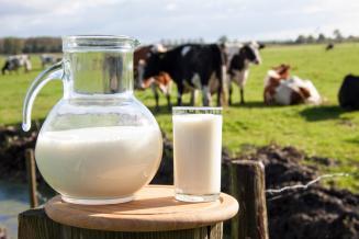 В сельхозорганизациях Удмуртской Республики за сутки получено 2 тыс. т молока