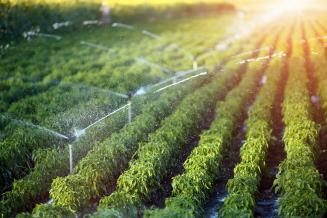 Ученые разработали оптимальную модель полива для повышения урожая
